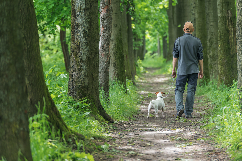 man hiking with dog in the woods
