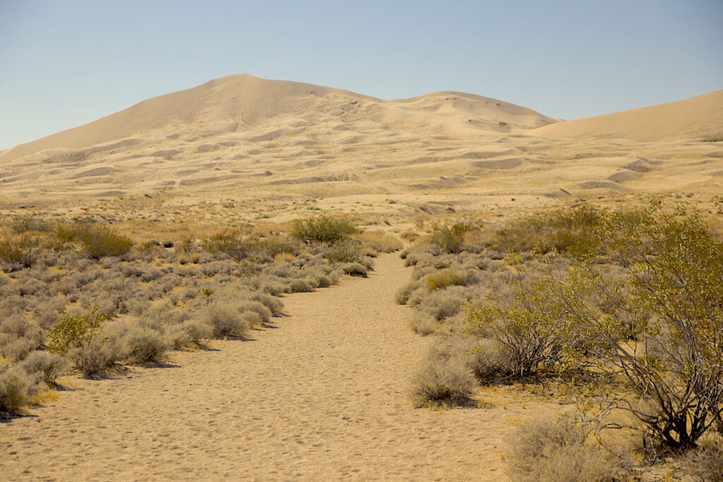 Mojave National Preserve Sand
